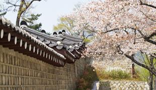 ソウルの春