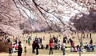 ソウル子供大公園