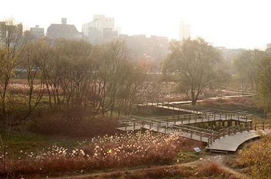 汝矣池、生態池