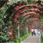 「ヨイド(汝矣島)春の花まつり」など、ソウルの春のフラワーストリートを堪能しょう