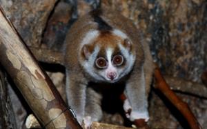 絶滅危惧動物を救え…種保全教育館オープン