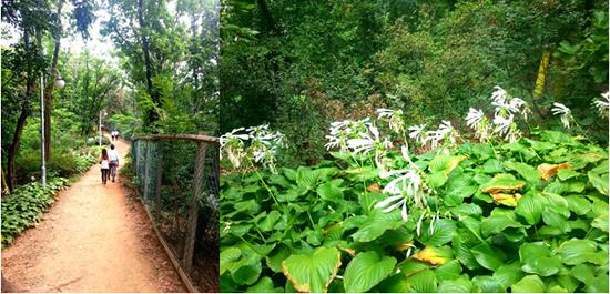 都心の中の森の道を歩く 「ソリプル公園」