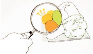 ソウル市 全国初「環境にやさしい給食の食材ガイドライン」策定