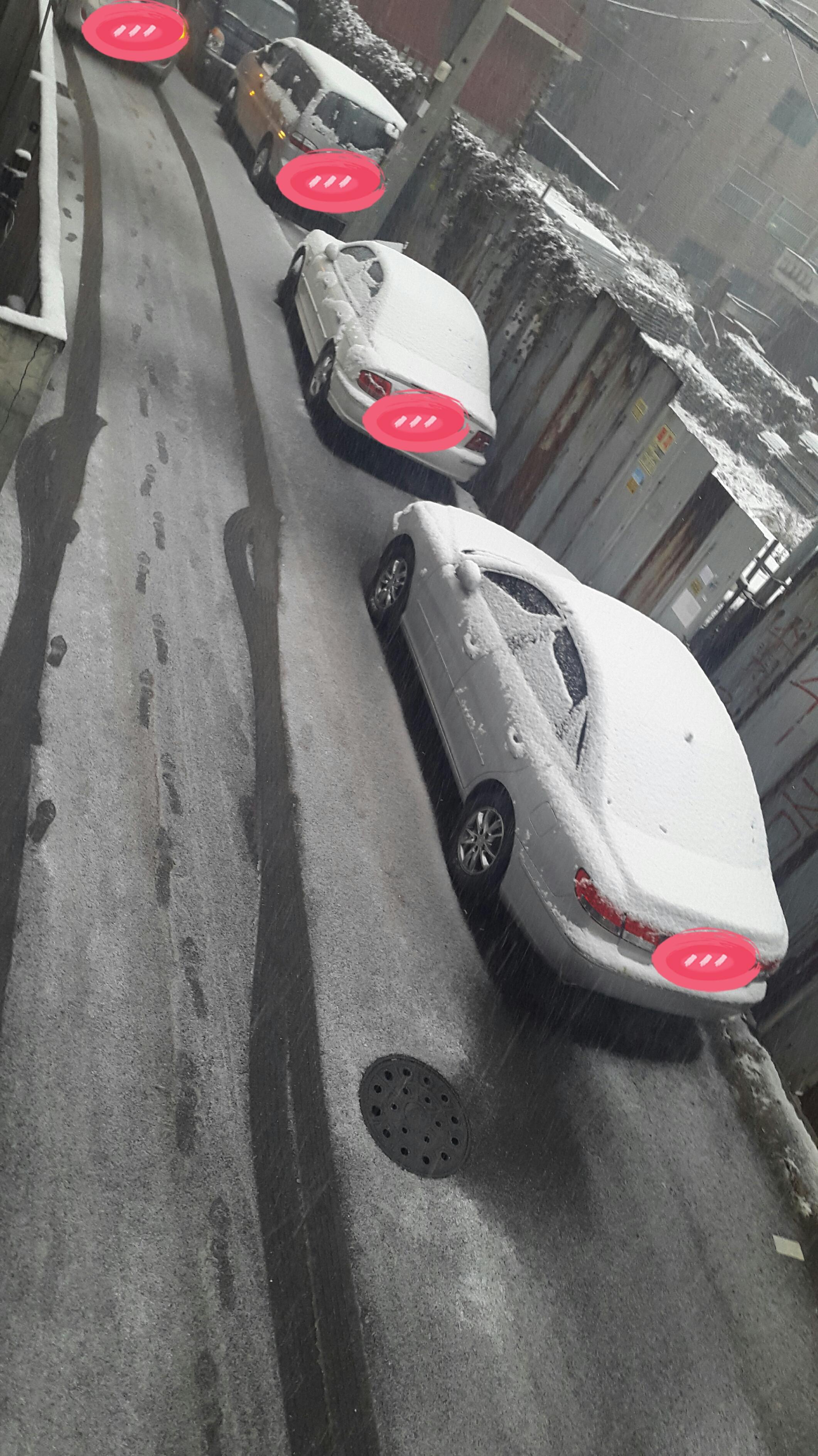 눈이 쌓였어요!雪が積もりました!
