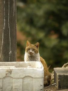ソウル市、官民協力で「野良猫TNR事業」の対象を1万匹に拡大