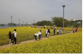 """""""ハンガン(漢江)の春、花として咲く""""《ハンガン(漢江)春の花祭り》"""