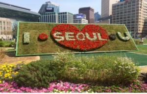 ソウル市庁で豪華な春を満喫してください!