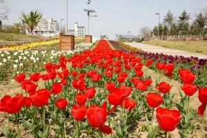 ハンガン(漢江)に沿って歩くソウル散歩コース4選