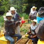 ソウル都市養蜂、設置当初の5箱から70倍成長…6日市民座談会