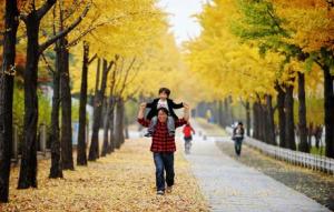 都心のきれいな紅葉の道105選をご紹介します
