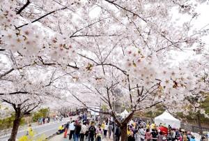 2017年に楽しむソウル市のお祭り