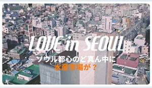 [Love in Seoul] ノリャンジン(鷺梁津)水産市場体験