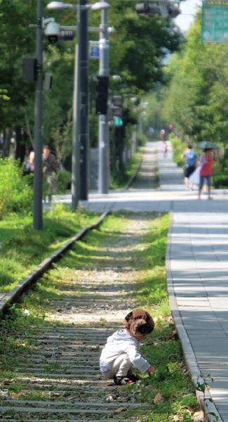 キョンチュン線森の道