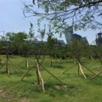 ハンガン(漢江)が回復しつつある! 4種類のテーマを持つハンガン(漢江)の森の造成完了