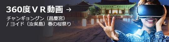 360度VR動画 → チャンギョングン(昌慶宮) / ヨイド(汝矣島)春の桜祭り