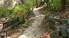自然の道 (森で森を癒す)