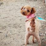 ソウル市「犬と一緒に楽しむ秋のピクニック」開催