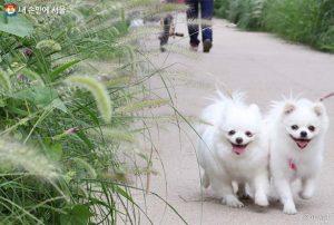 ソウル市、「内蔵型マイクロチップ」を利用してペット犬を動物登録