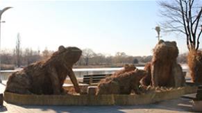 己亥年を迎え、ソウルワールドカップ公園の「ススキ」が自然美術作品へと変わる!