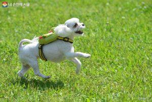ソウル市「動物共生都市」宣布…全国初の内蔵型チップ&里親動物の保険支援