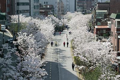 ソウル市、美しい春の花道160選紹介