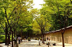 ソウル市「都心の夏の緑道220選」選定 newsletter