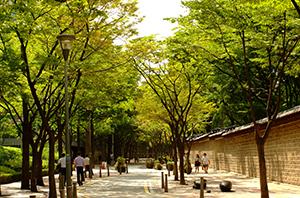 ソウル市「都心の夏の緑道220選」選定