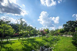 北ソウル夢の森(Dream Forest)