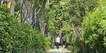 ソウル市、68か所に40万株の木を植えて「街路樹森の道」を造成、PM2.5↓歩行者の利便性↑