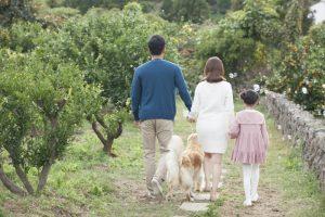 「世界ファミリーガーデン」ソウル居住外国人の参加を募集