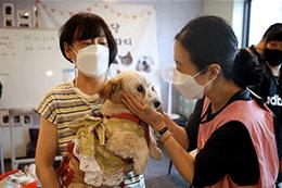 ソウル市、捨てられた動物と里親との縁組を活性化させるべく取り組む