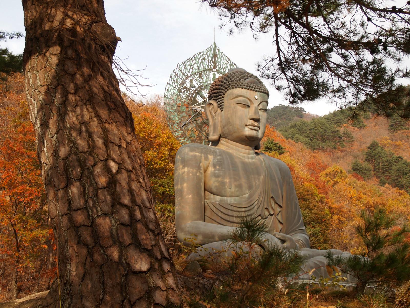 Final Fall Encounters at Seoraksan National Park