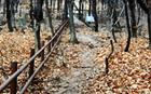 ソウルの主な山をつなぐ200キロ徒歩旅行コースを造成