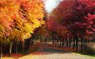 ソウル市、「2010もみじと落ち葉の道」を選定