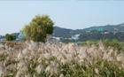 ソウル市、漢江公園「秋のスポットbest3」を発表