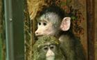 ソウル動物園、101周年を迎え希少動物の出産が相次ぐ