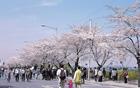 ソウル全域で多彩な春の祭りが盛りだくさん!