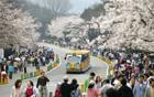 今年最後の春の花ビッグフェスティバル、ソウル動物園で開催。