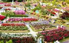 ソウル大公園で、バラの香りと共にお祭りを満喫しましょう