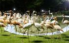 ソウルの主要公園夜間開場