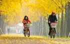 ソウル市、「今年、紅葉がきれいな道」80ヶ所を選ぶ