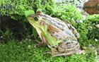 ソウル動物園「世界不思議蛙特別企画展」