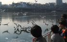 遊覧船に乗って「冬の渡り鳥の旅」に出かけよう