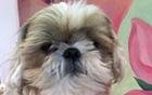 [朴元淳の市政日記54] ペットを探す方法、動物登録制