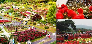 ソウル大公園、2万坪の庭に数千万本のバラの波