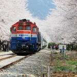 春の花テーマ観光列車